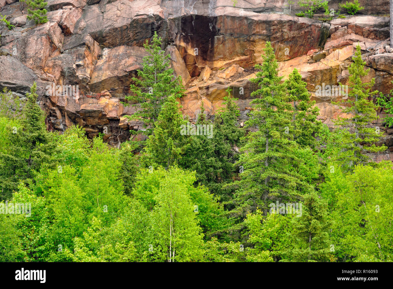 Aspens and spruces at the base of a cliff, Wanup, Ontario, Canada - Stock Image