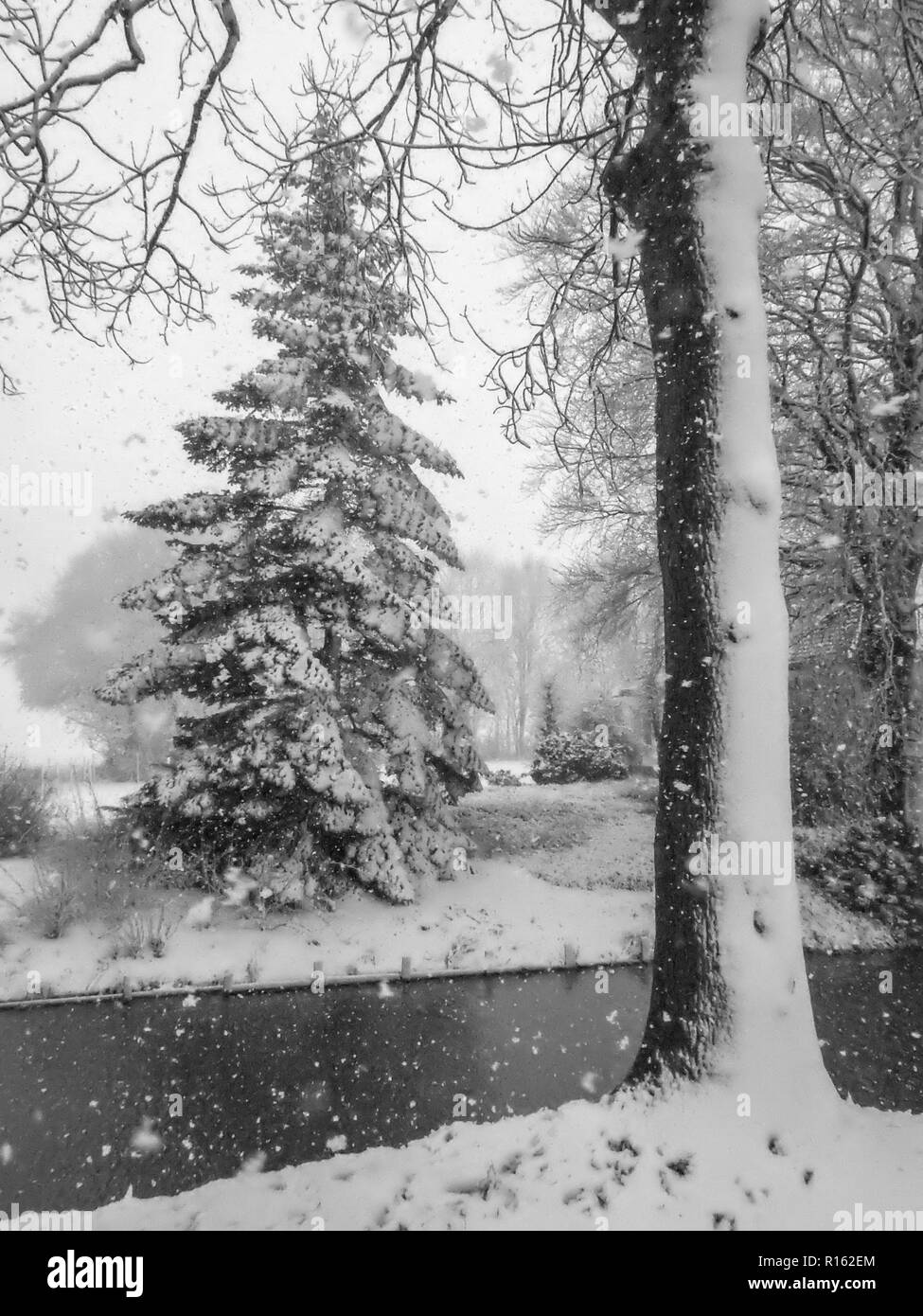 Trees covered with a layer of snow. This day an active front (even with some thunder) moved slowly over the Low Countries, causing prolific snowfall. - Stock Image