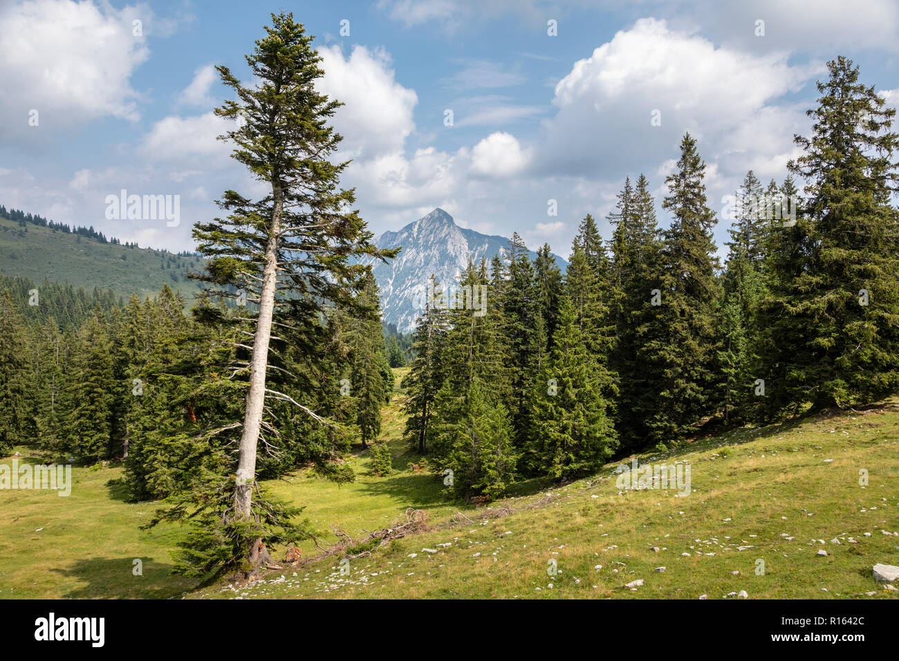 View from Postalm scenic walk, near Strobl, Austria - Stock Image