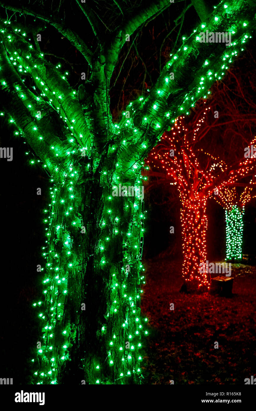 Coloured Outdoor Christmas Lights On Trees Stock Photo Alamy