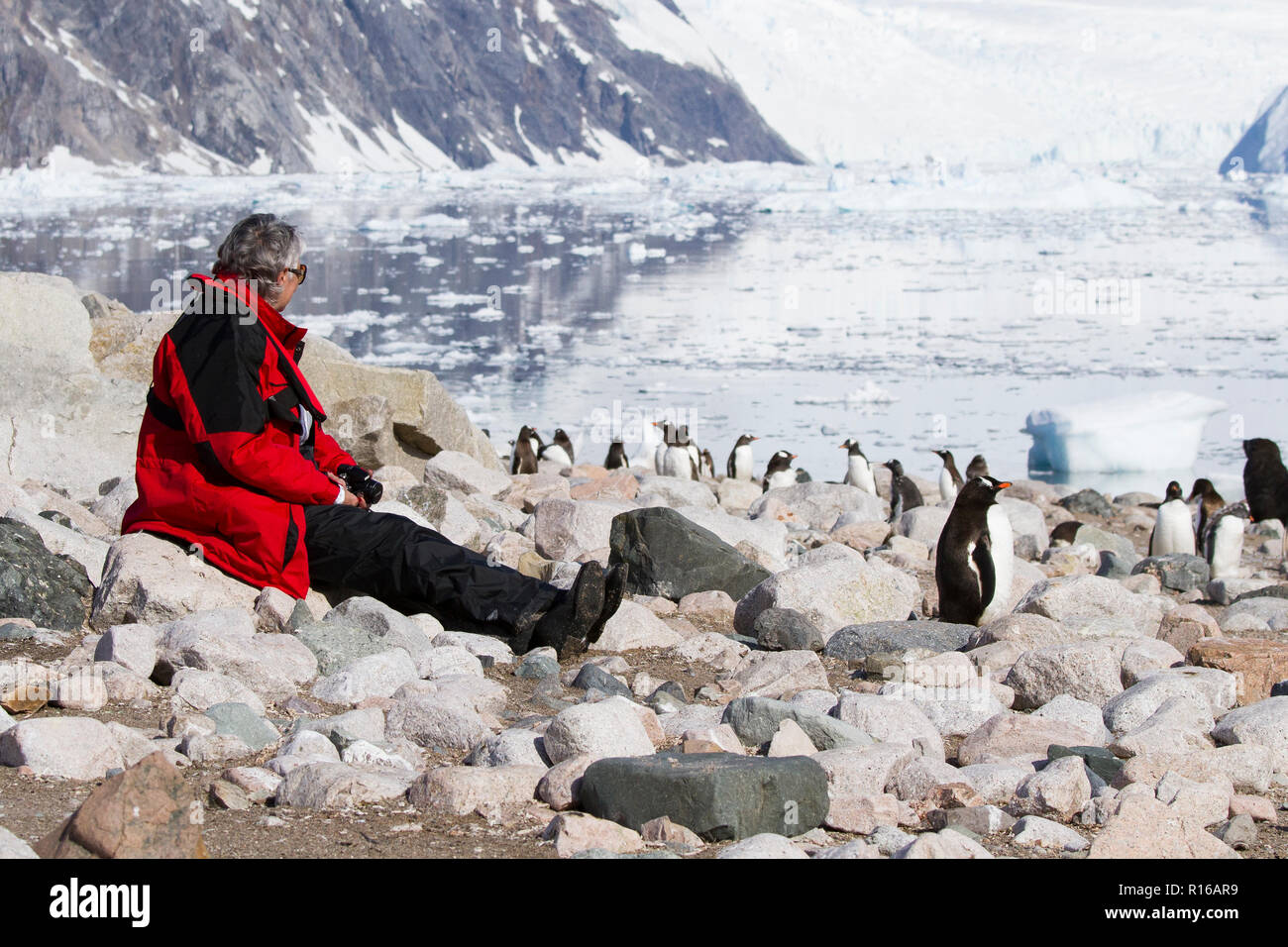 Antarctica tourists with penguins in Antarctica landscape. - Stock Image