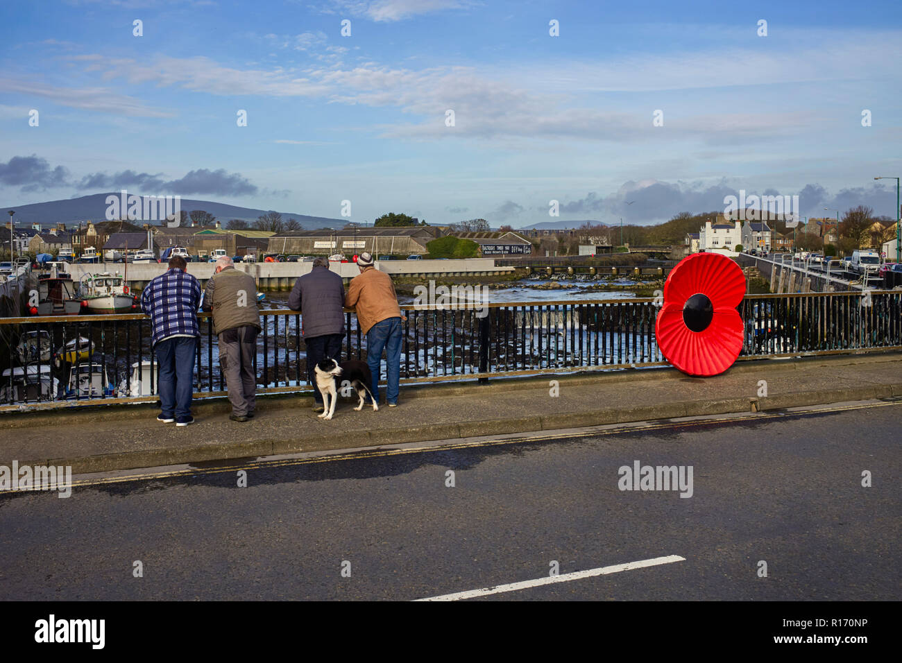 Four men looking over a bridge with a giant plastic poppy in Castletown, Isle of Man - Stock Image