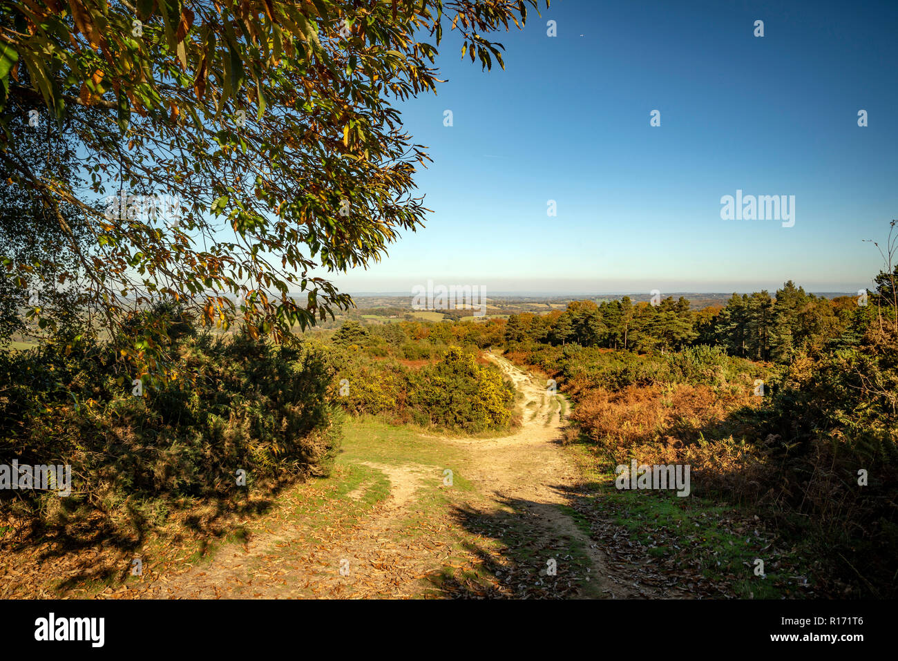 The view from Gills Lap in Ashdown Forest, East Sussex, UK - Stock Image