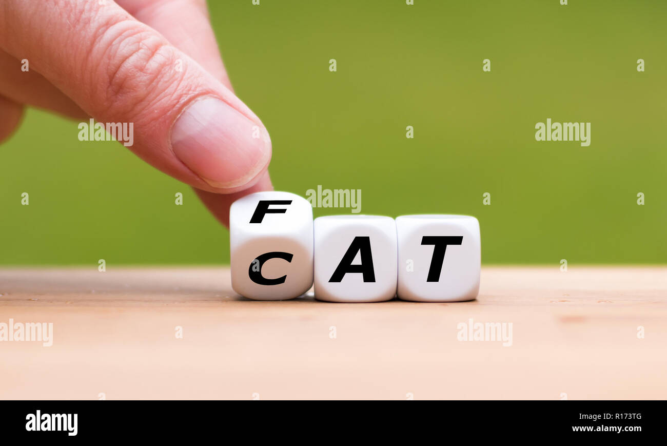 Hand turns a dice and changes the word 'CAT' to 'FAT' - Stock Image