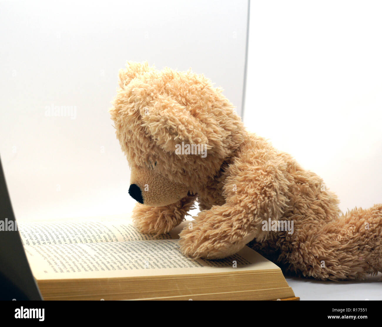 brown reading teddy bear at white background Stock Photo