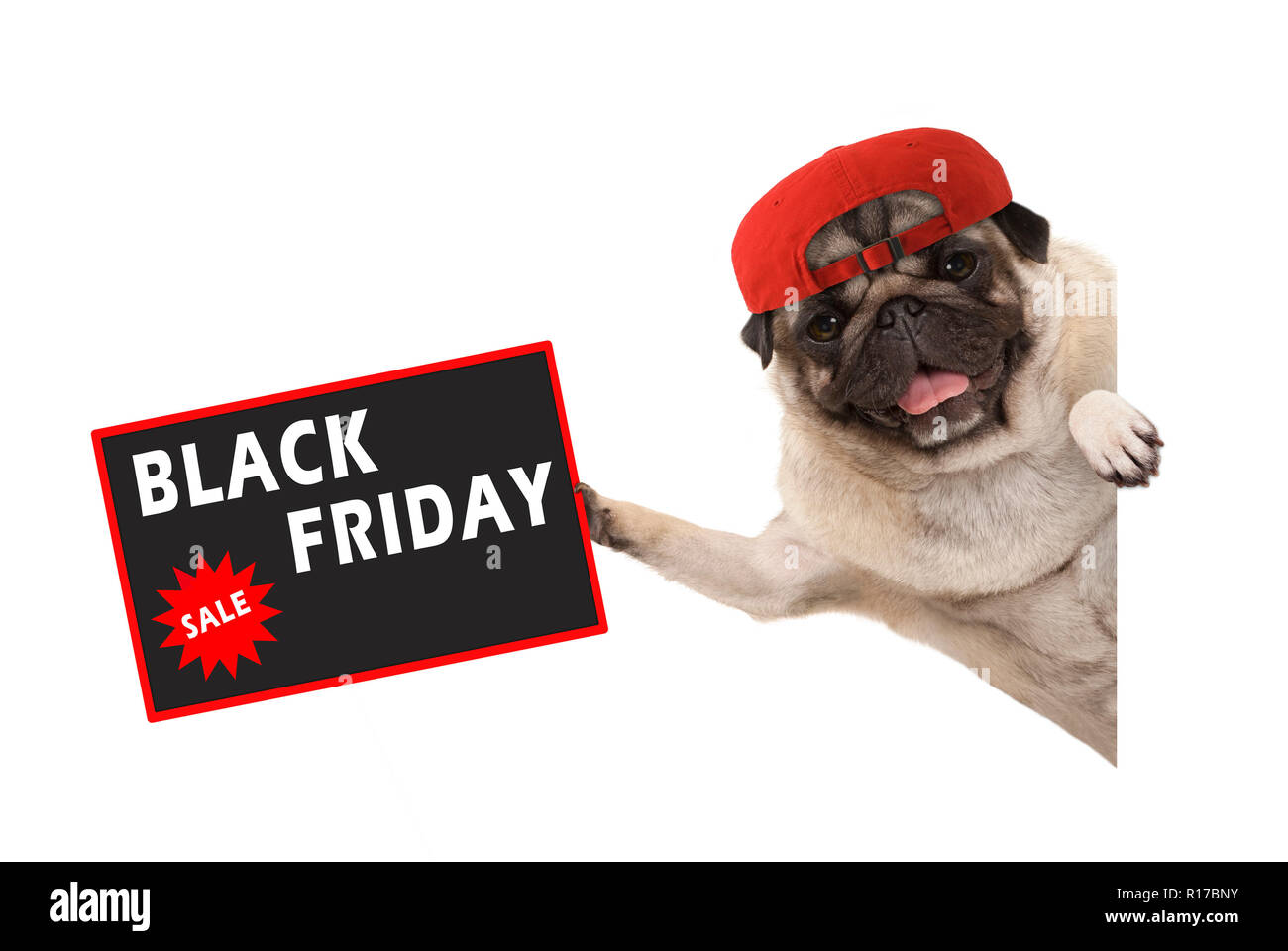 frolic pug puppy dog with red cap, holding up sale sign with text Black Friday, hanging sideways from white banner, isolated Stock Photo