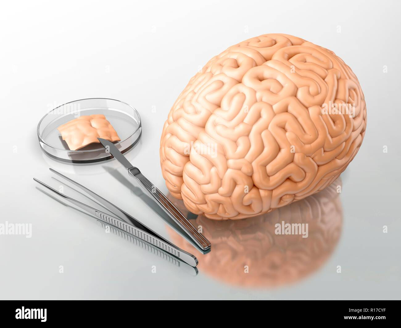 Human brain and surgical instruments on a laboratory table