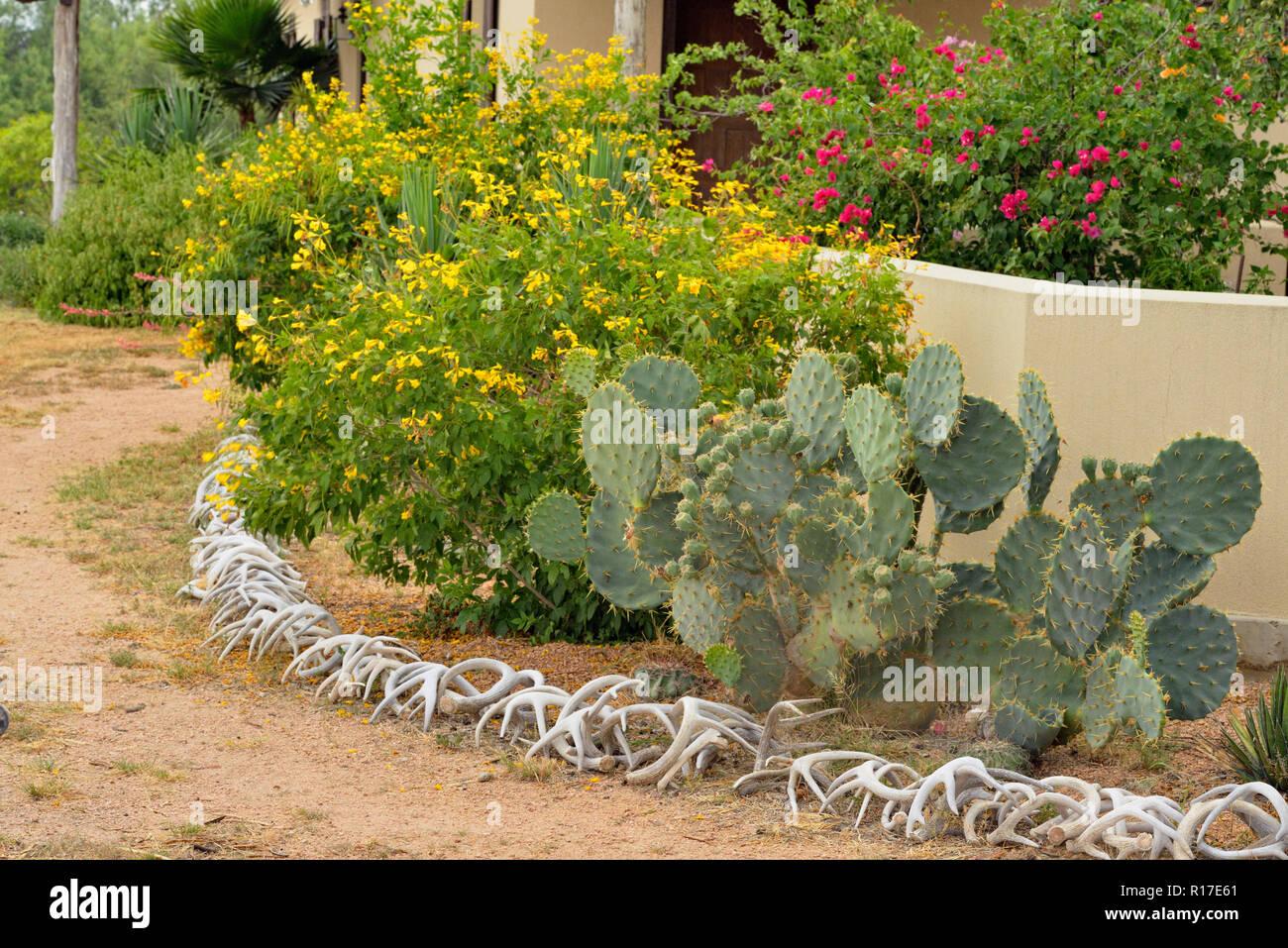Desert landscaping around Campos Viejos Ranch, Rio Grande City, Texas, USA Stock Photo