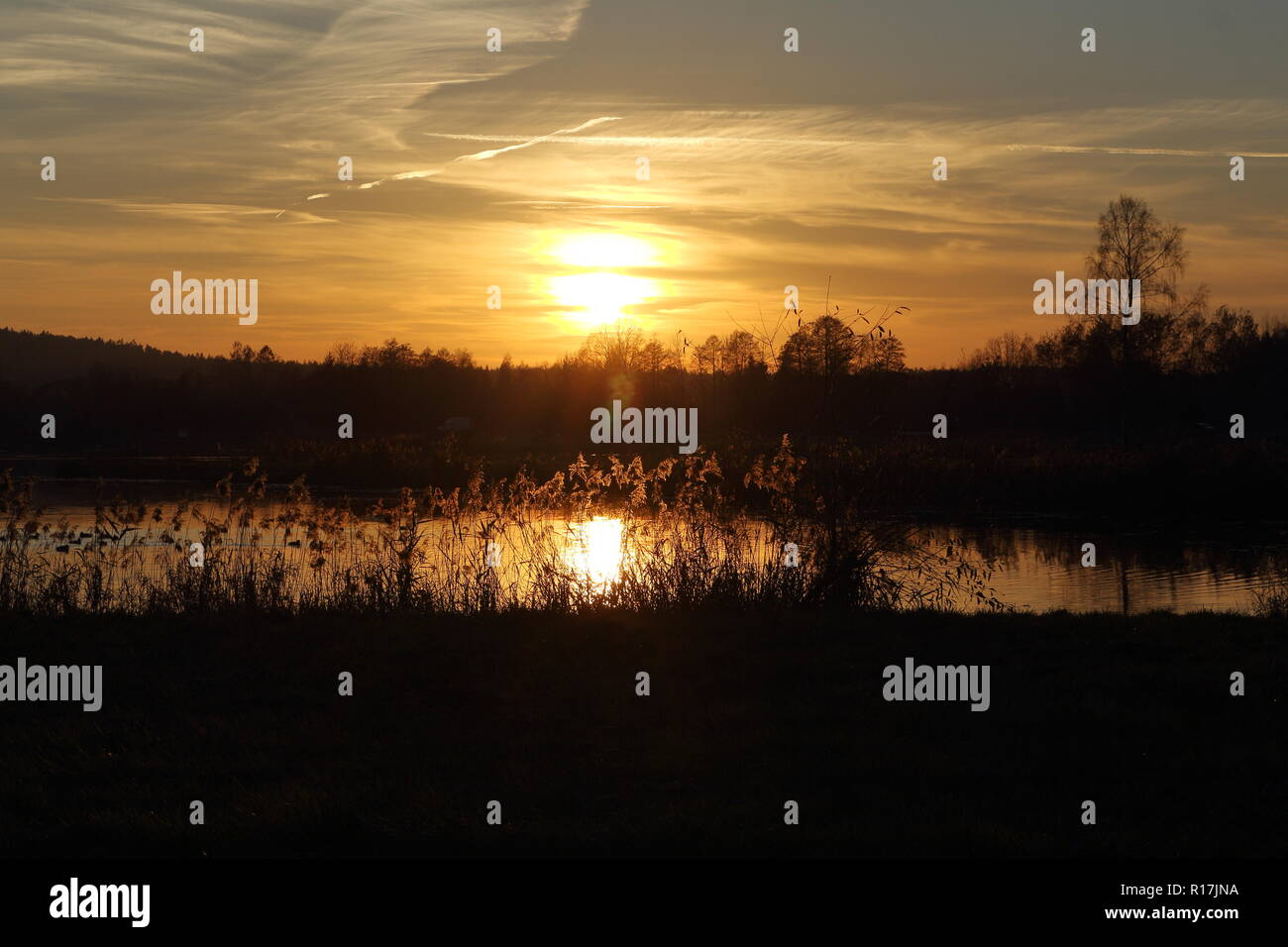 Dramatic sunset over the lake. Silhouettes of rushes, reeds, grass, water plants and forest in late autumn - Stock Image
