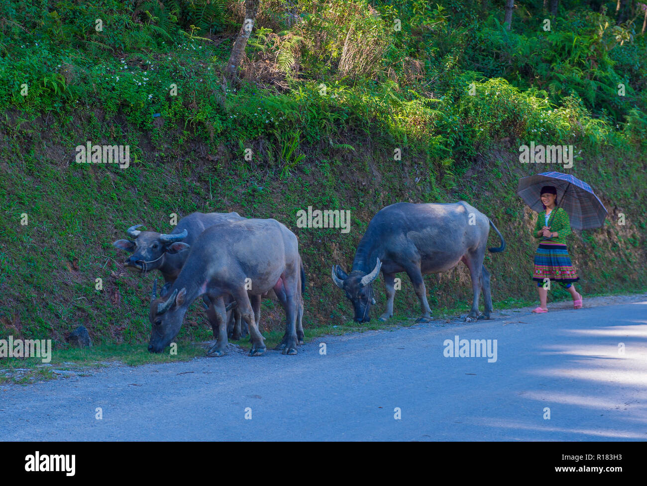 HA GIANG , VIETNAM - SEP 15 : Vietnamese farmer in the countrside near Ha Giang Vietnam on September 15 2018. nearly 80 percent of the population of V - Stock Image