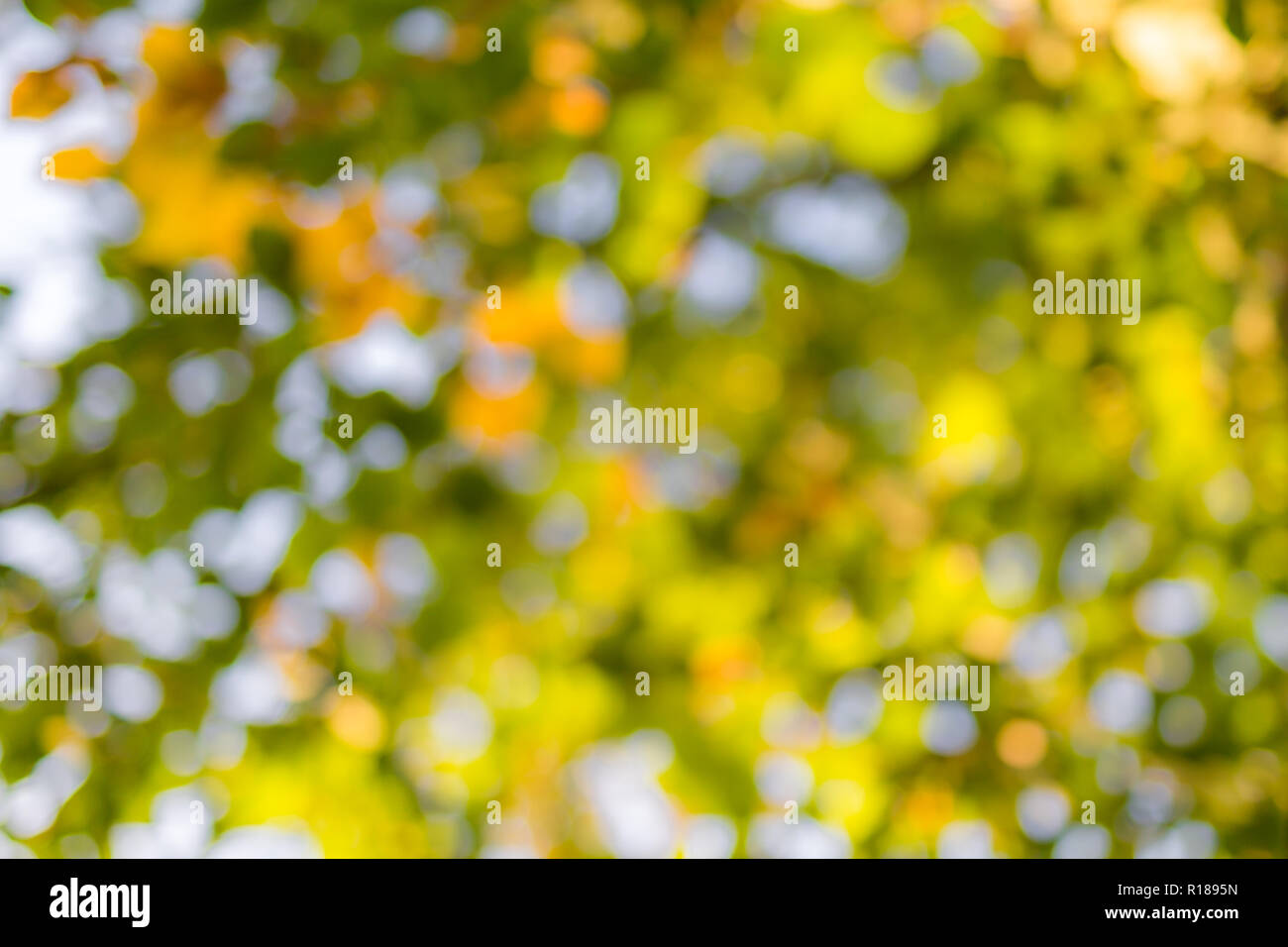 Natural green blur background in sunlight, abstract round bokeh from green leaves, blurred background - Stock Image