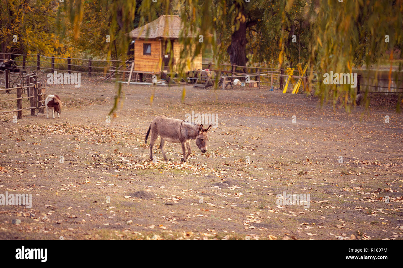 donkey and a horse on a farm outdoors - pet animal Stock Photo