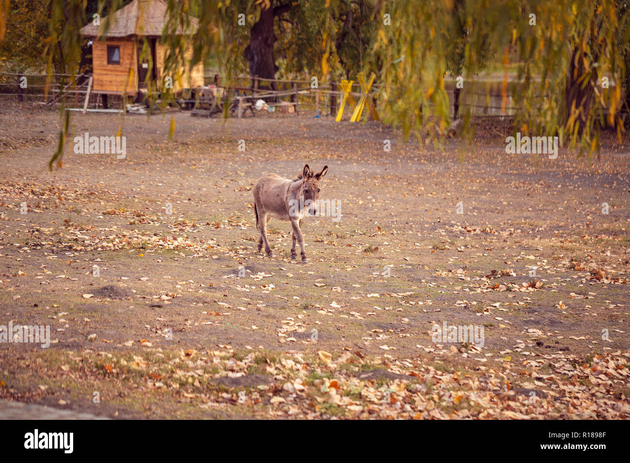 brown young donkey on a farm outdoors - pet animal Stock Photo