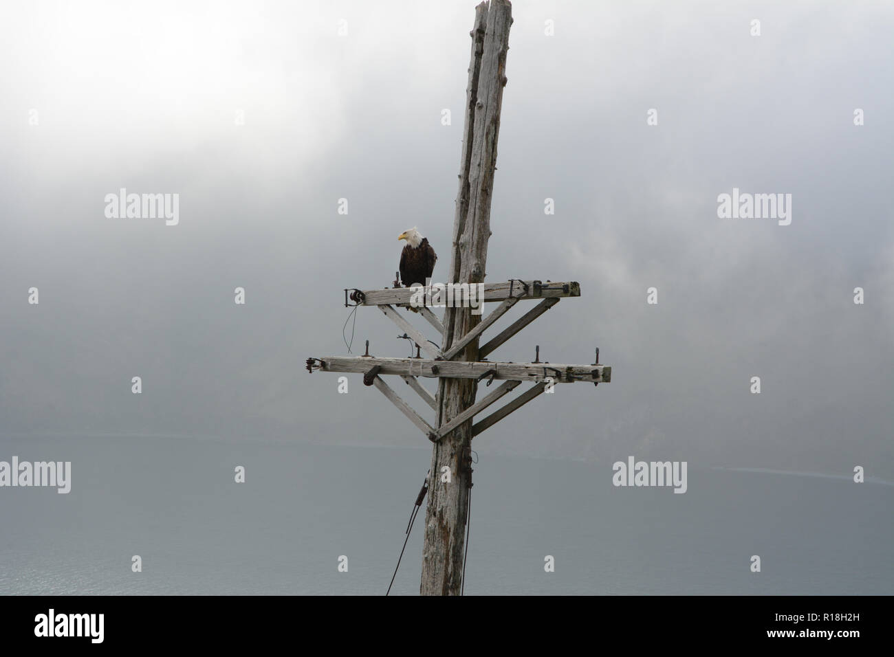 A bald eagle perched on an old electrical pole above the Bering Sea and the town of Dutch Harbor, Unalaska Island, Alaska, USA. - Stock Image