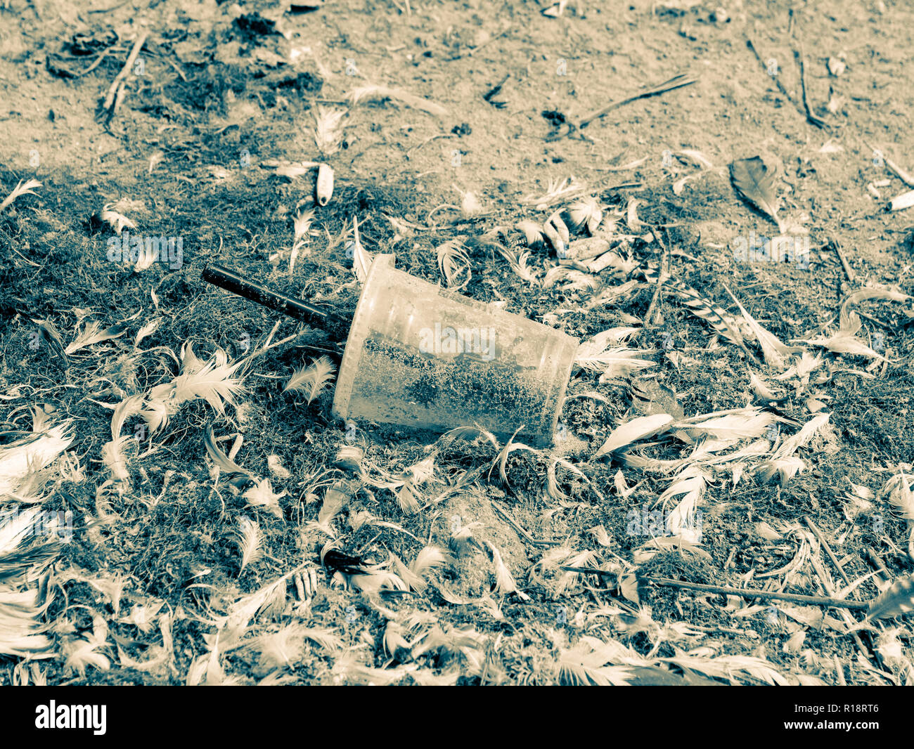 Discarded plastic takeaway cup with straw littering sand of beach between bird feathers, Netherlands - Stock Image