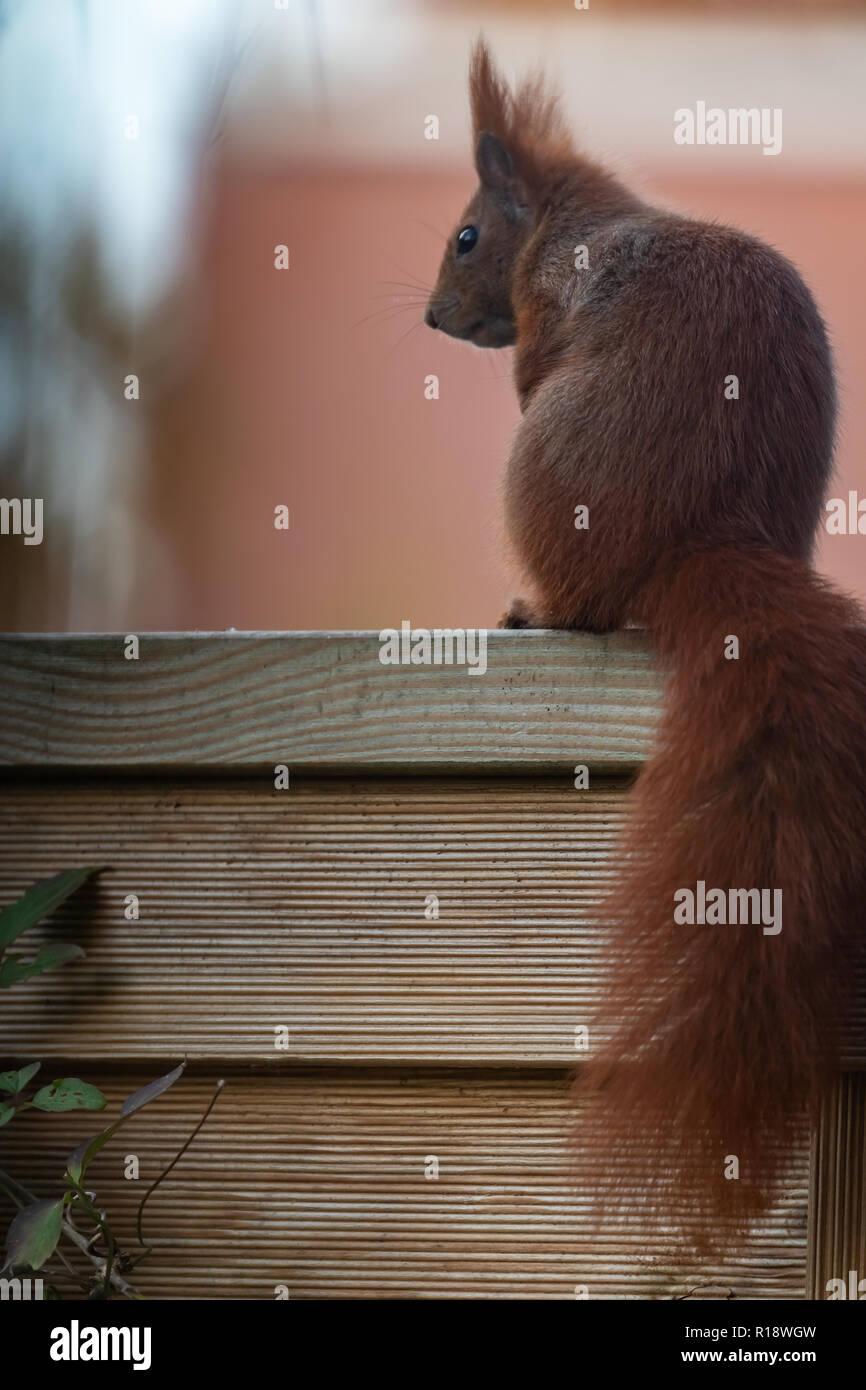 säugetier stock photos & säugetier stock images - alamy