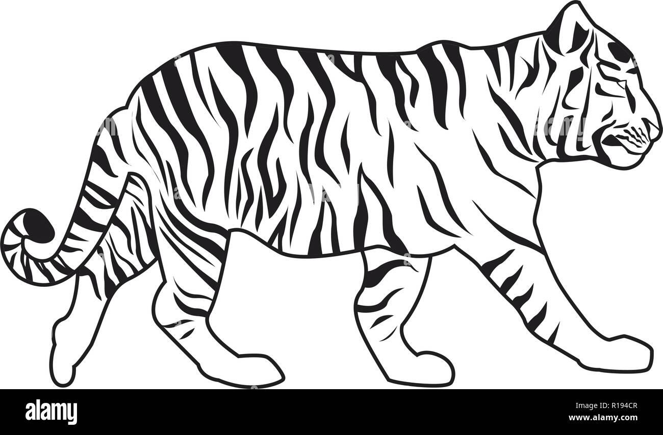 wild tiger body cartoon vector illustration graphic design - Stock Image