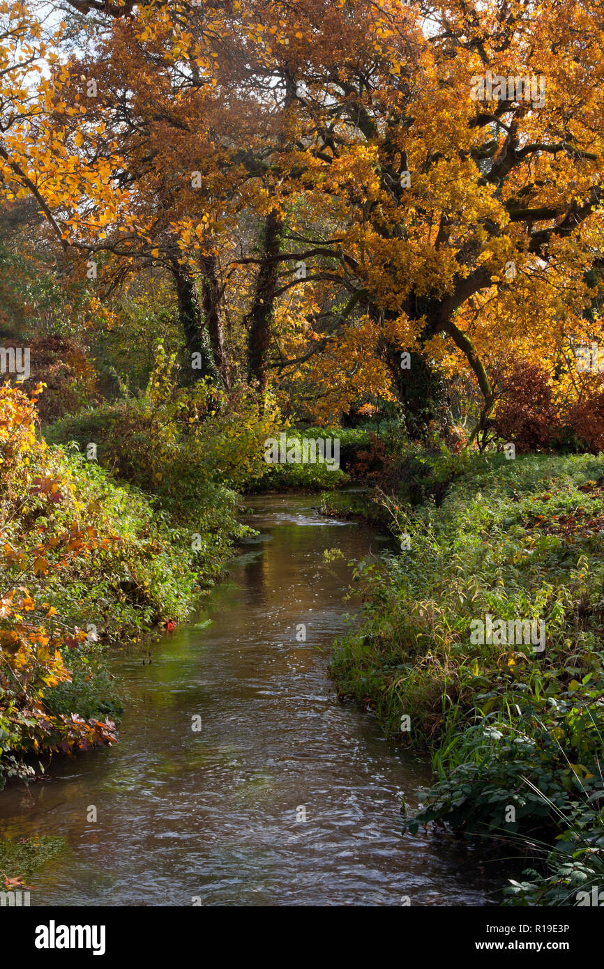 River Wey in autumn feeds the former watermill at Elstead, Surrey, England Stock Photo