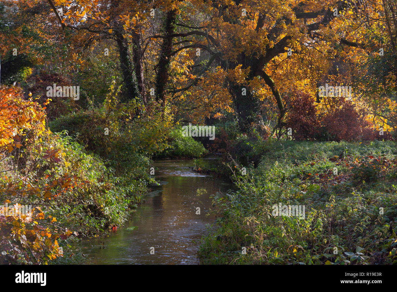 River Wey in autumn feeds the stream to the former watermill at Elstead, Surrey, England Stock Photo