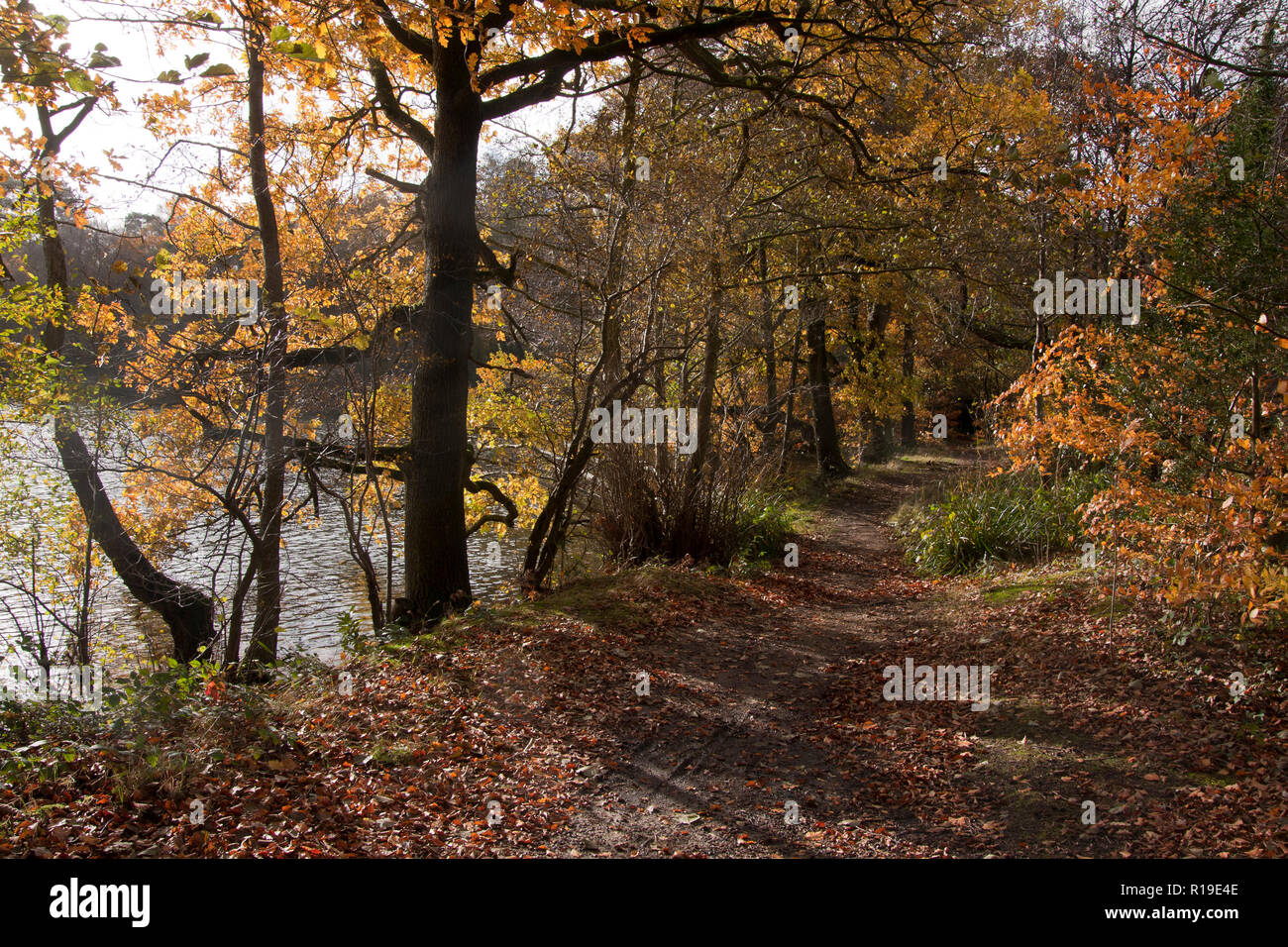 autumn, the Tarn, Puttenham, nr Godalming & Guildford, Surrey, England - Stock Image