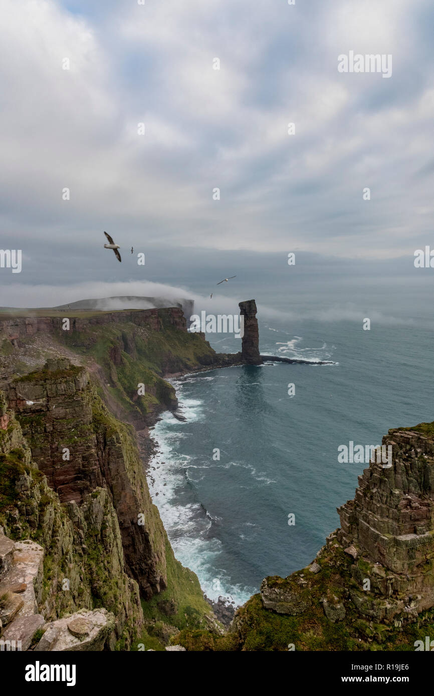 Old man of Hoy shrouded in mist with Fulmar soaring - Stock Image