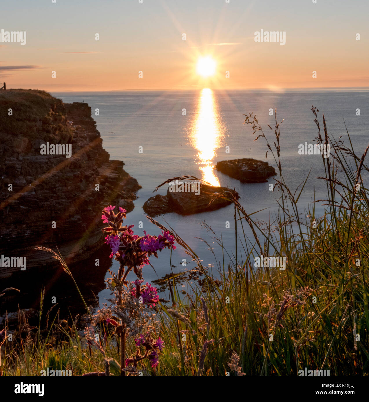 Cliffs at Deerness Nature reserve , Mainland Orkney at sunrise. Stock Photo