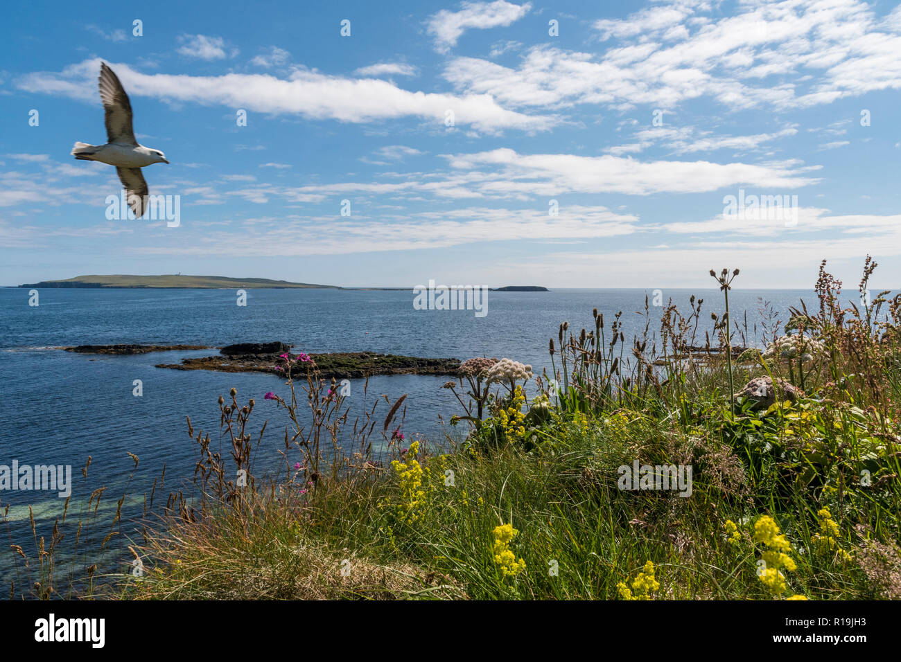 View to Egilsay from cliff walk on Rousay - Stock Image