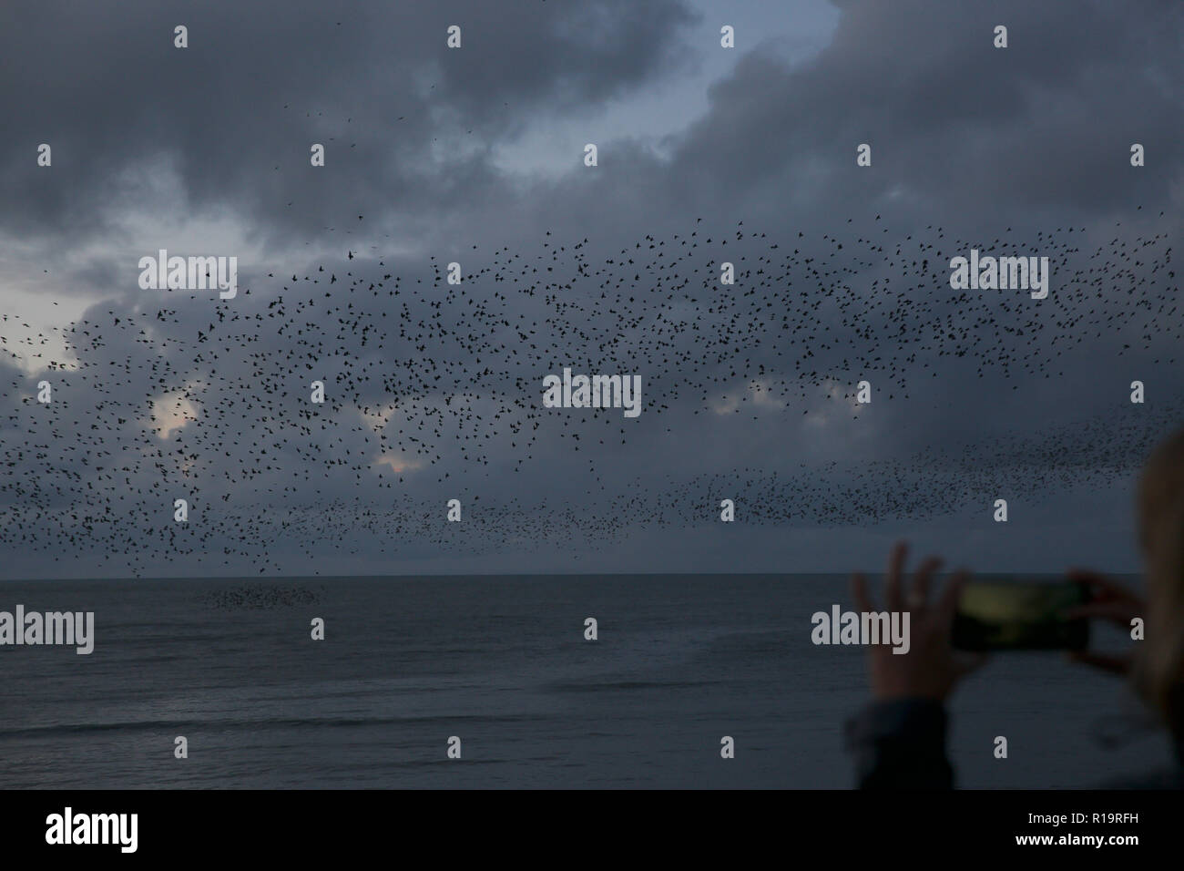 Aberystwyth,UK,10th November 2018,Starling Murmuration in Aberystwyth, Wales, as the sunsets on a windy Autumn afternoon Hundreds of starlings form amazing patterns and shapes as they group together before going under the pier to roost for the night.Credit: Keith Larby/Alamy Live News - Stock Image