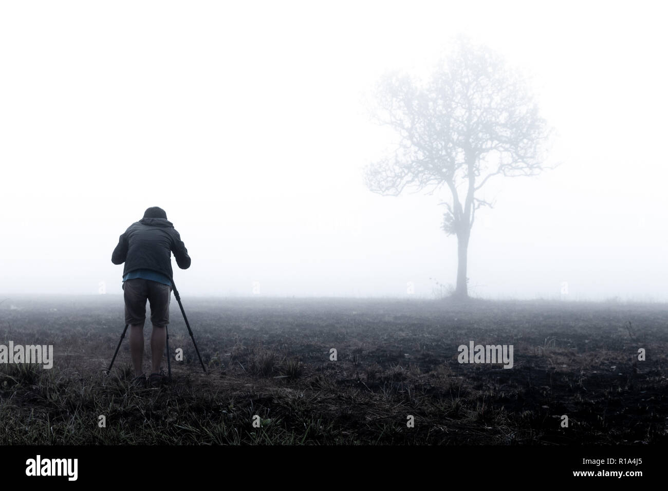 photographer taking photo of lone tree in thick morning fog. photographing tree in Thailand national park. low visibility due to water mist. Stock Photo