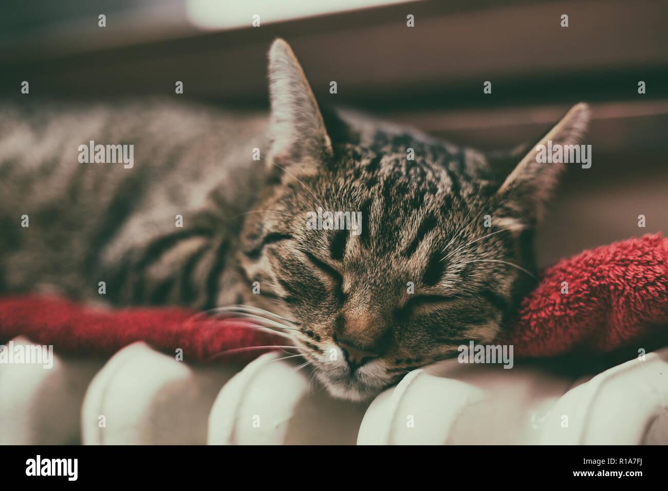 Beautiful cat sleeping on radiator by the window. - Stock Image