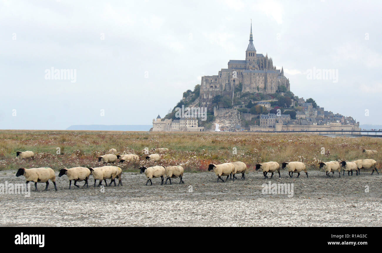 Beautiful scenic view of famous historic Le Mont Saint-Michel tidal island with sheep grazing on fields in the morning, an UNESCO world heritage site, Stock Photo