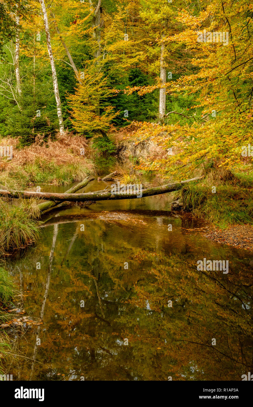 Blackwater Rhinefield Ornamental Drive The New Forest Hampshire England UK Stock Photo