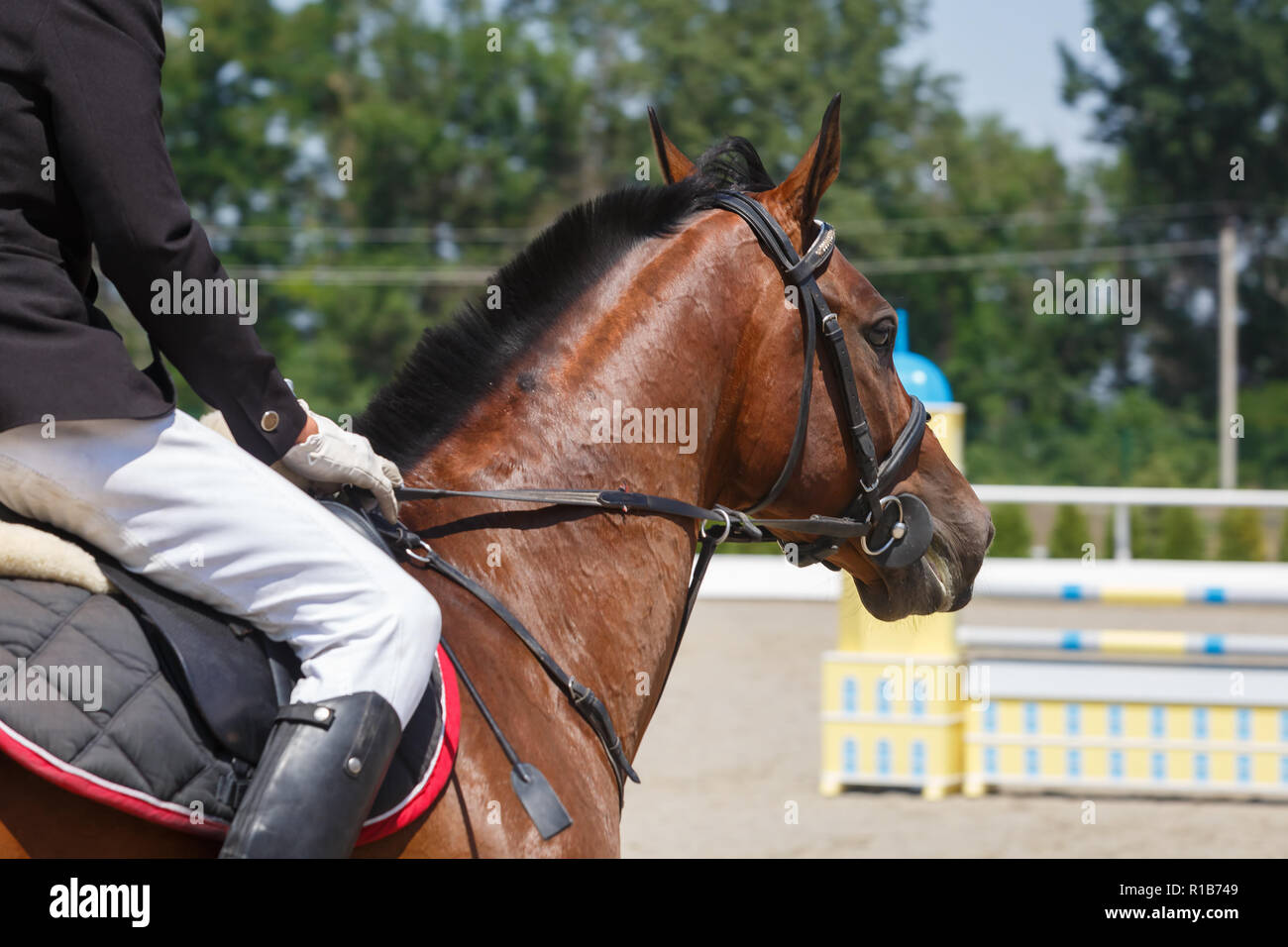 Horseman rides on the sorrel horse close up against the background of obstacles - Stock Image