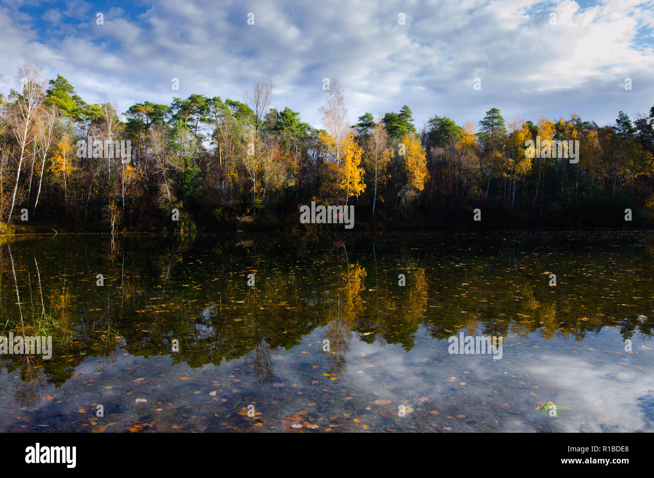 reflections in a lake in alsace near marckolsheim - Stock Image