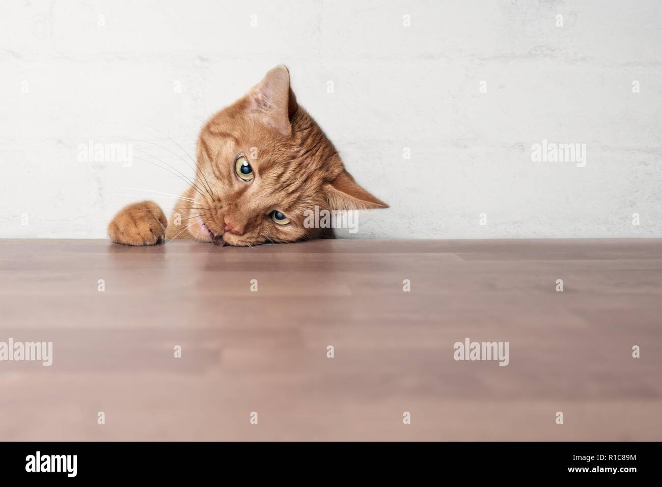 Naughty ginger cat stealing food from a table. - Stock Image