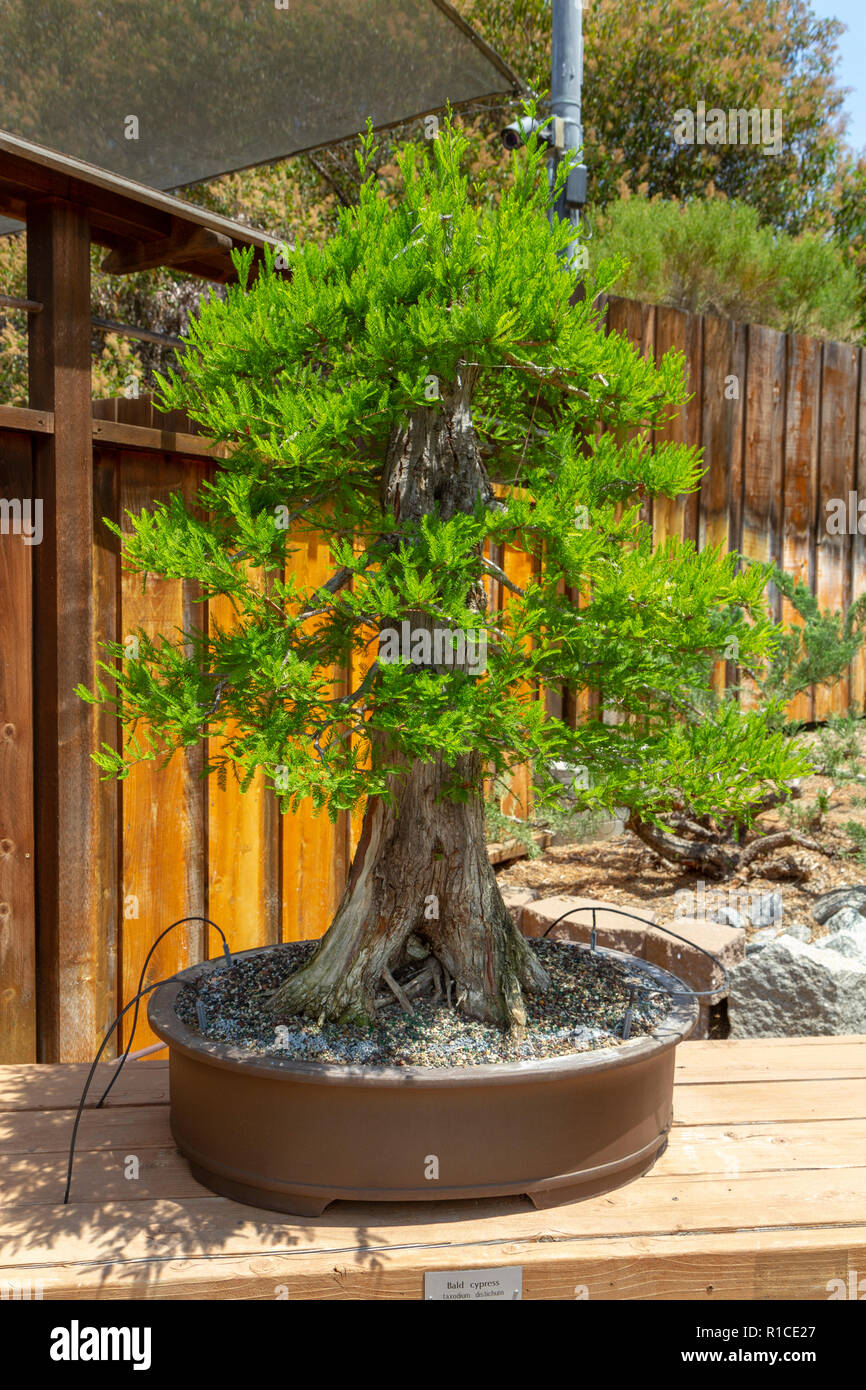 Cypress Tree High Resolution Stock Photography And Images Alamy