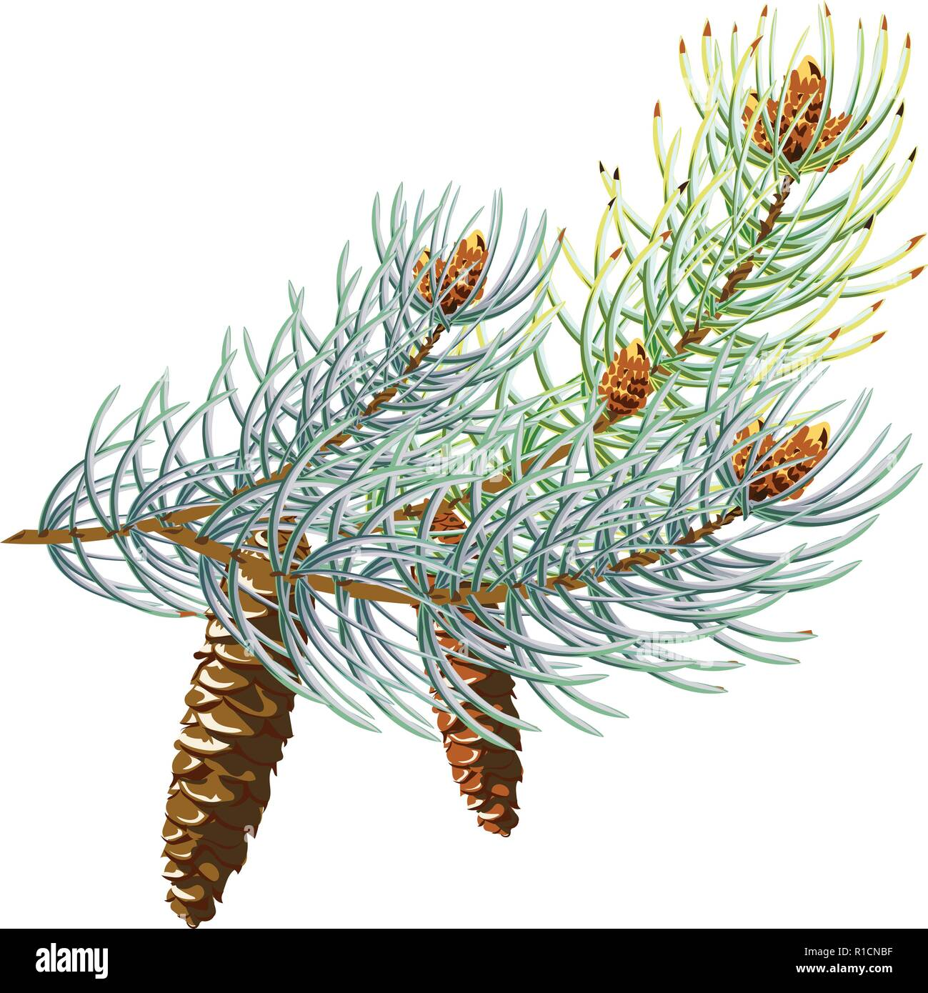 Pine cone with branch, spruce branch with a cone 10eps - Stock Vector