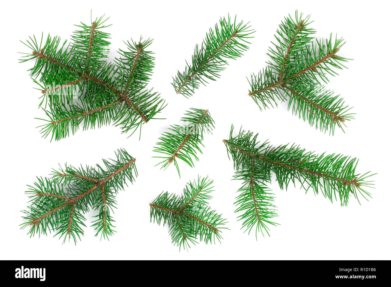 Fir tree branch isolated on white background. Christmas background. Top view - Stock Image