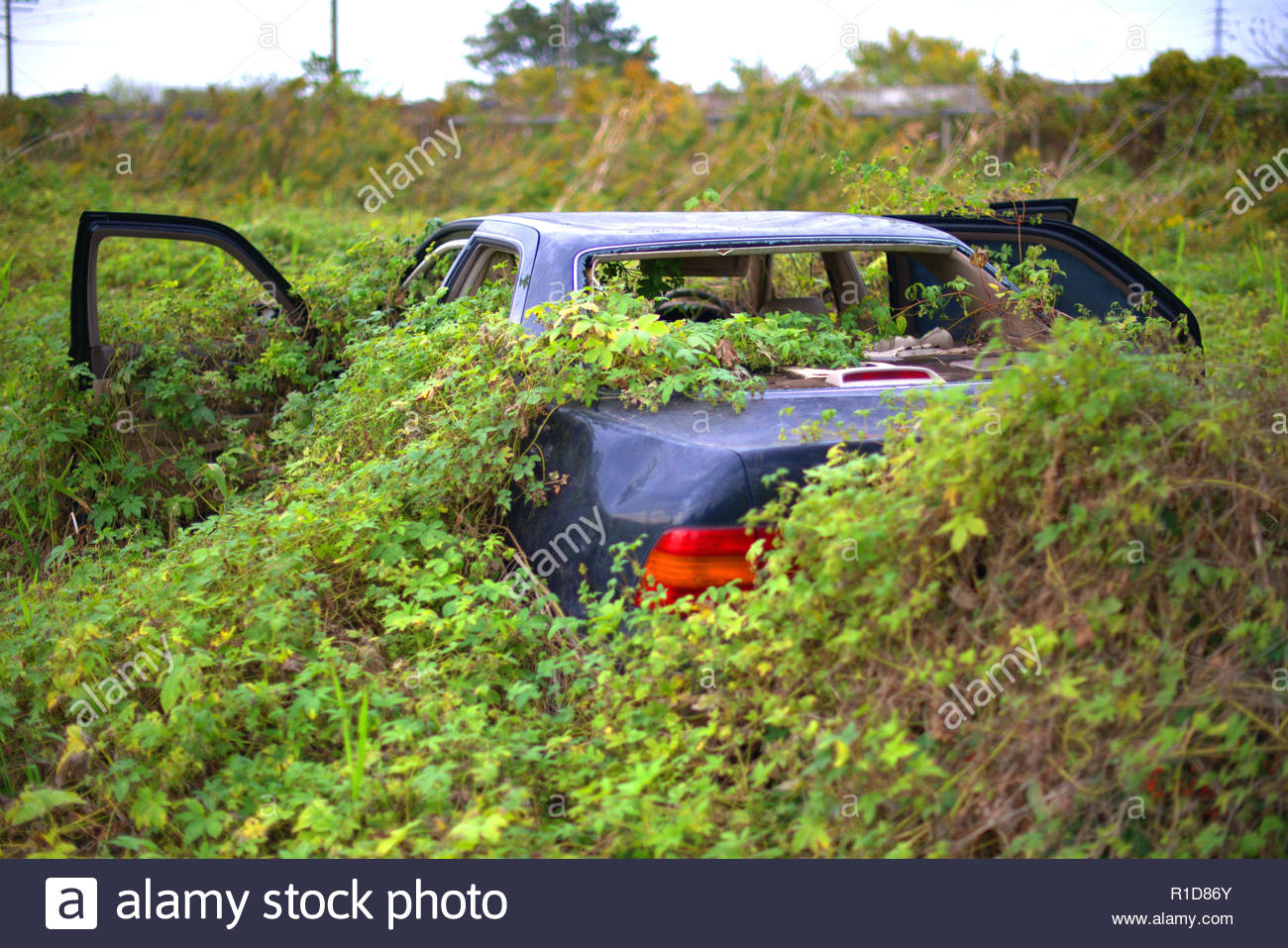 Abandoned overgrown car in field. - Stock Image