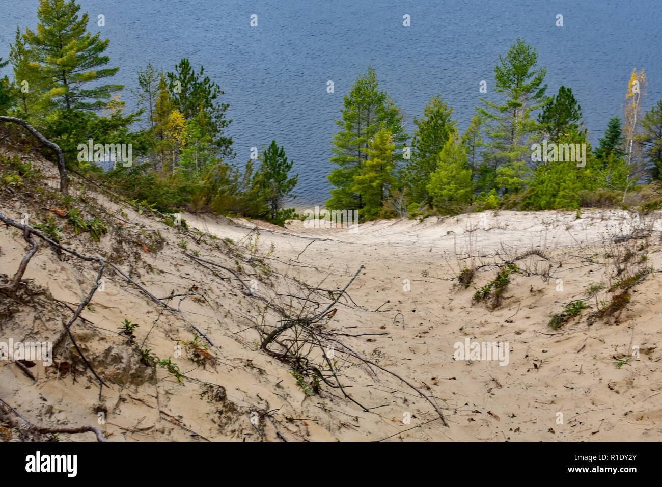 View from the top of a sand dune, with pine trees at the river/lake bank. Located in the Huron National Forest, Oscoda, Michigan. Stock Photo