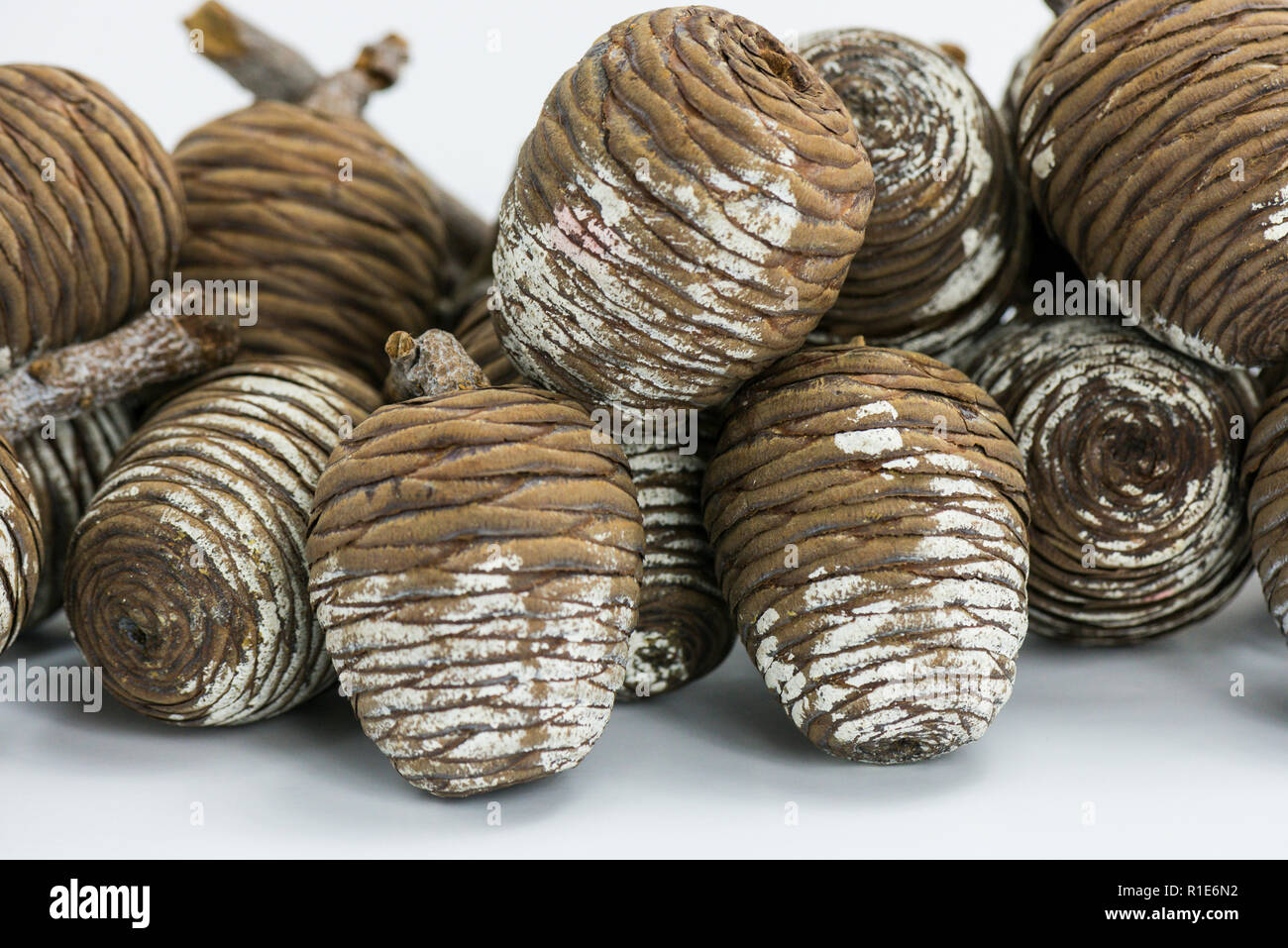 Painted pine cone Christmas decorations - Stock Image