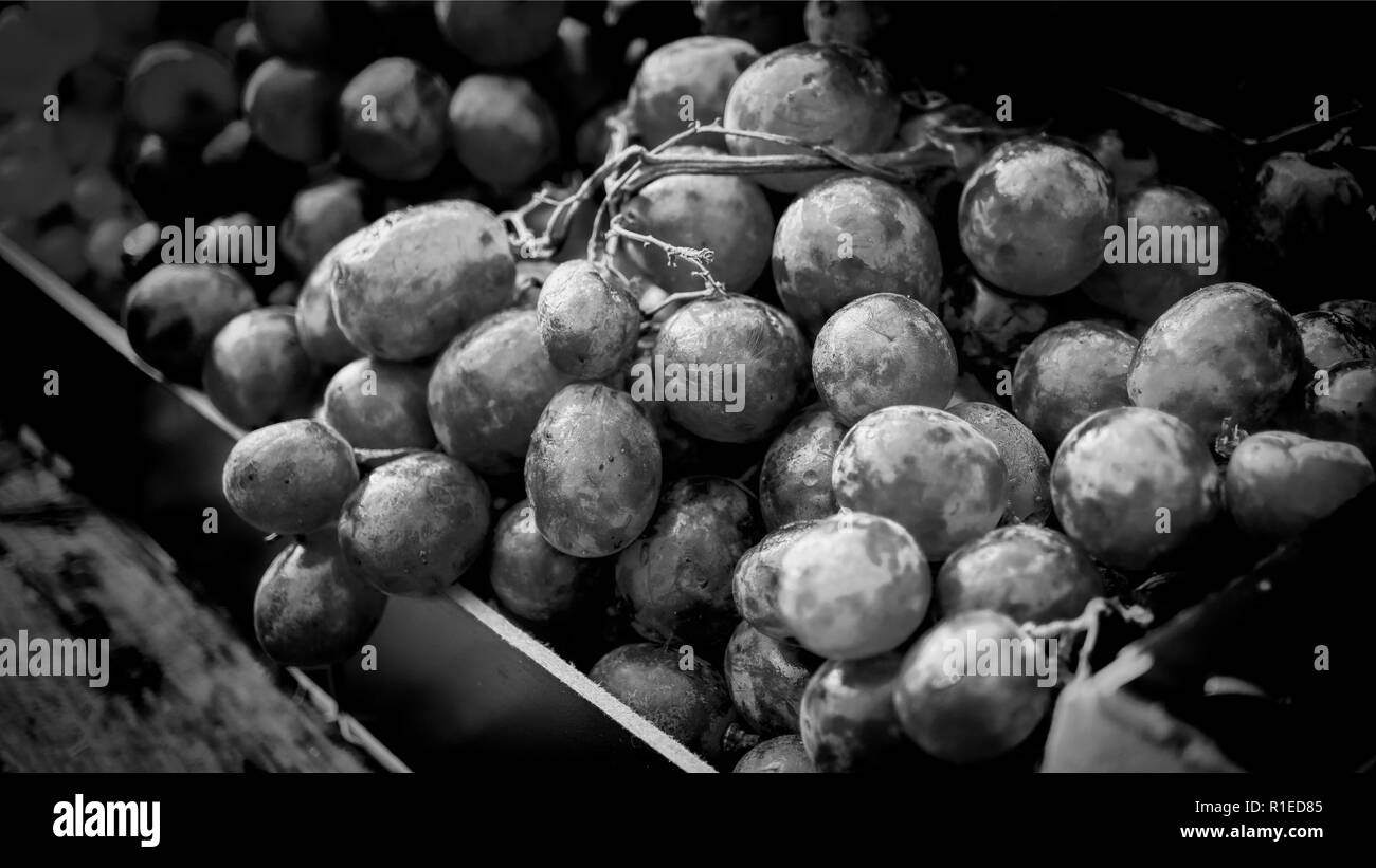 Black and white photo. bunch of red grapes in the sun on a store window - Stock Image