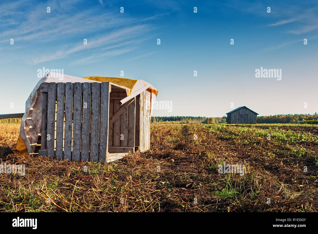 Two old wooden crates on an autumn field at the Northern Finland. The crates are used for storing potatoes. - Stock Image