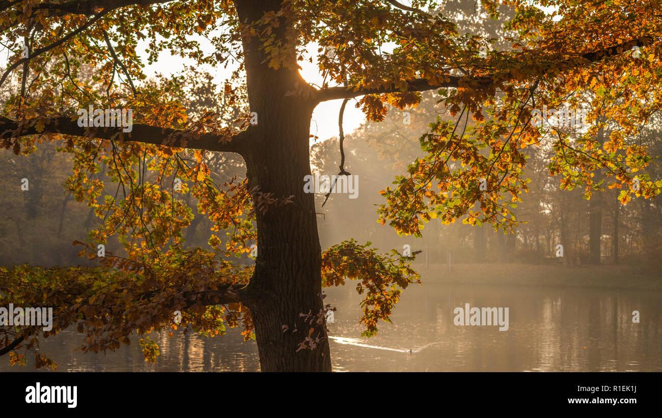 Autumn morning in Clara Zetkin Park Leipzig | Herbstmorgen im Clara-Zetkin-Park Leipzig, Germany - Stock Image