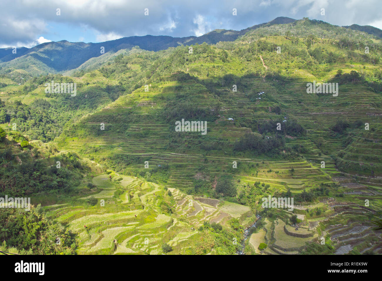 The Banaue Rice Terraces are carved into the mountains of Ifugao in the Philippines by the ancestors of the indigenous people. - Stock Image
