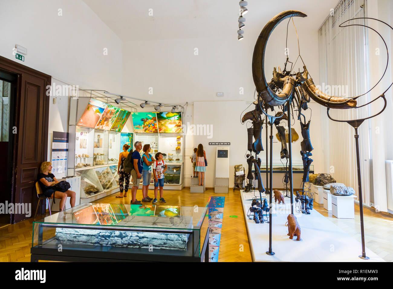 Mammoth skeleton (Mammuthus primigenius). - Stock Image