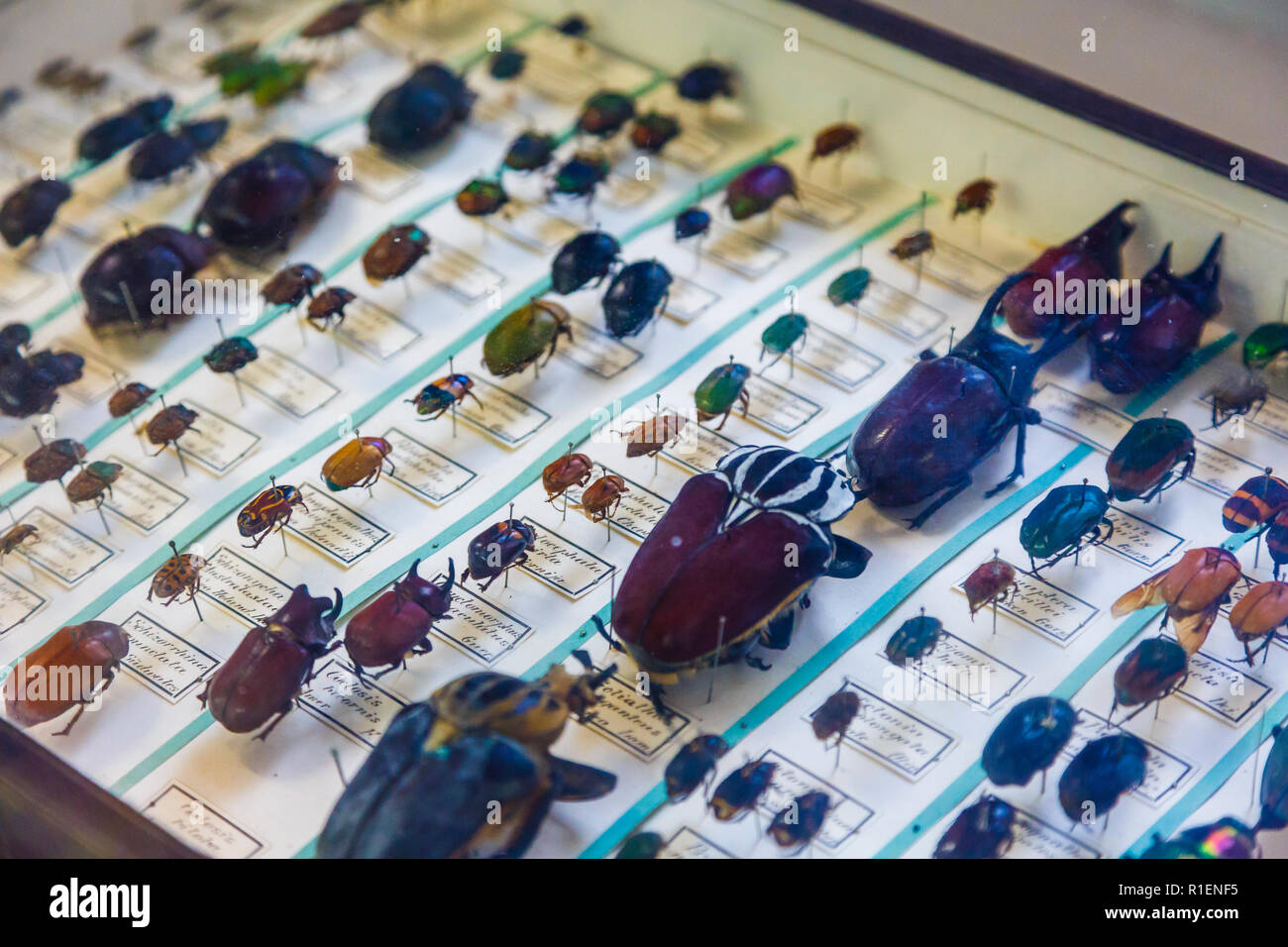 Beetles showcase. - Stock Image