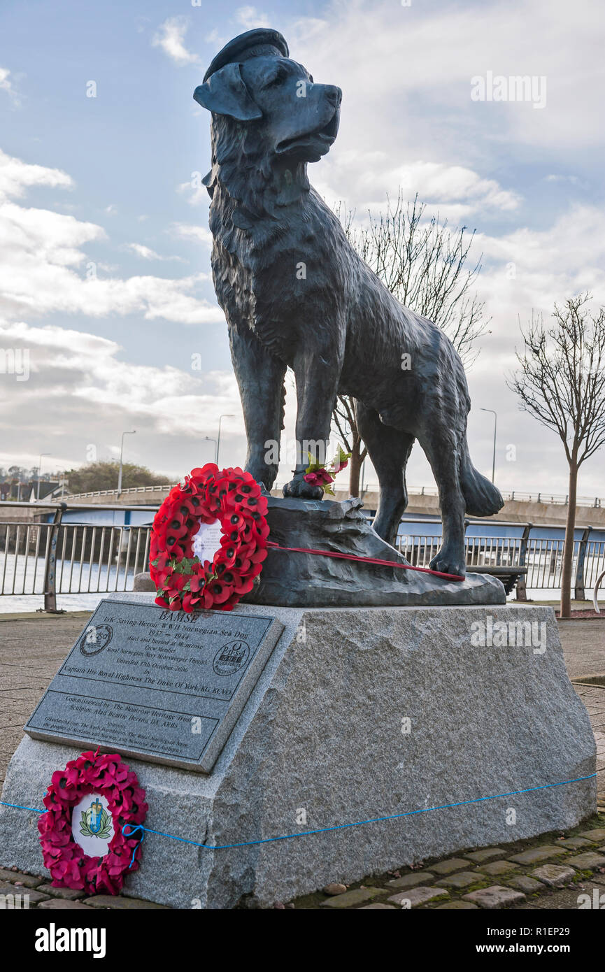 Bamse statue, Montrose, Angus, Scotland, Uk with memorial wreaths. - Stock Image