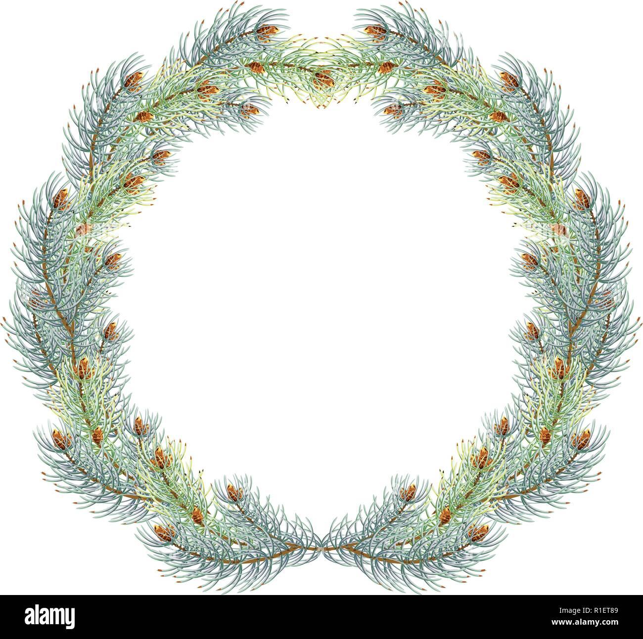 Green christmas pine wreath. blue spruce christmas wreath. - Stock Vector