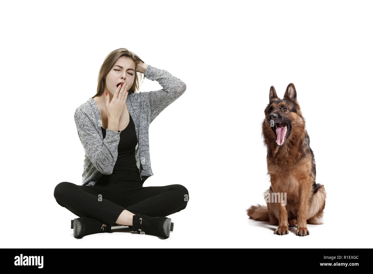 The yawning bored woman and her dog over white background. Shetland Sheepdog sitting in front of a white studio background. The concept of humans and animals same emotions - Stock Image